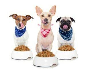 Krmivo podľa veku, veľkosti a zdravia psa