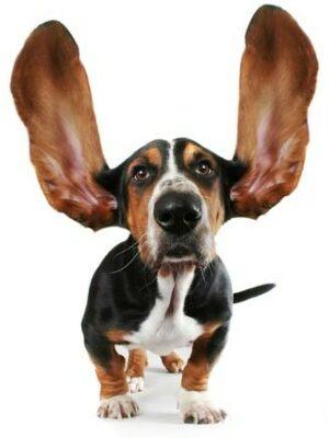 Starostlivosť o uši a oči