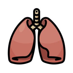 Dýchacie cesty, kašeľ, nádcha
