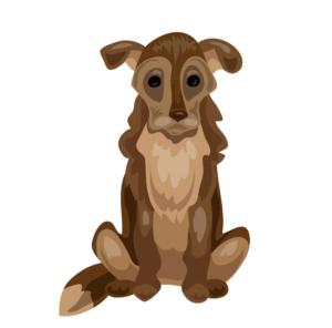 Starší pes - geriatriká